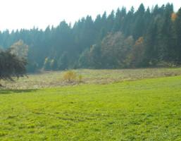 Działka na sprzedaż, Limanowski Gm. Dobra Wola Skrzydlańska, 450 000 zł, 9100 m2, 5019